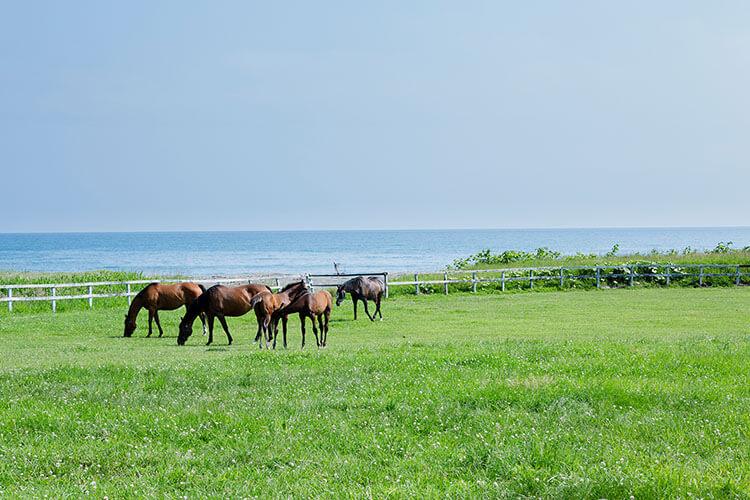 ナチュラルリゾート・ハイジア 草原と馬