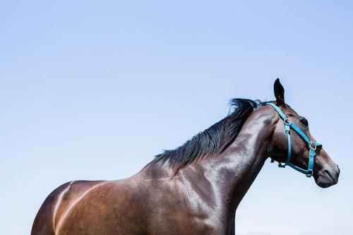 日高の風景;馬