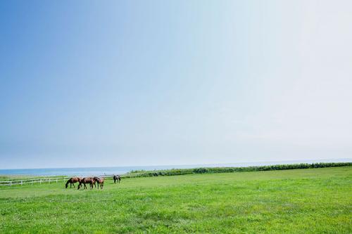 日高の風景;馬と草原